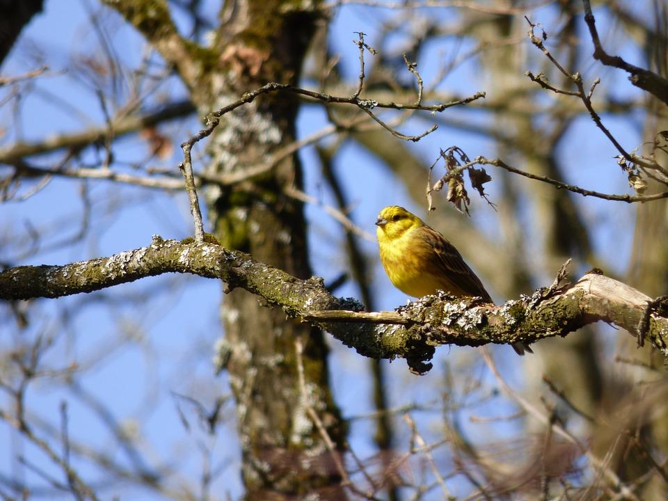 When's the next Big Farmland Bird Count?