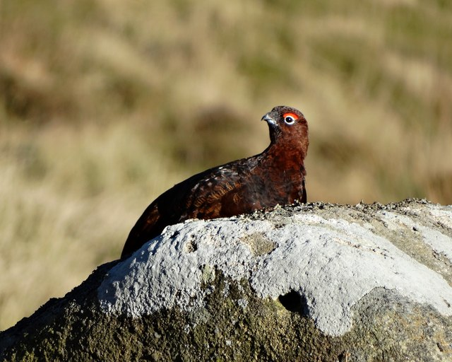 Grouse shooting providing an economic boost to local communities